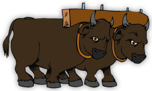 two-oxen